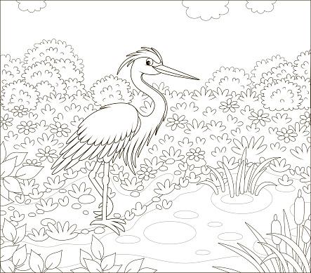 Grey heron by a small lake
