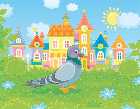 Grey pigeon walking on grass