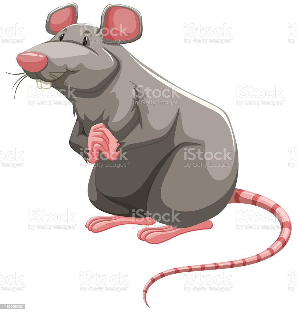 royalty free rat clip art vector images illustrations istock rh istockphoto com clipart retirement clip art rattle snake biting a man