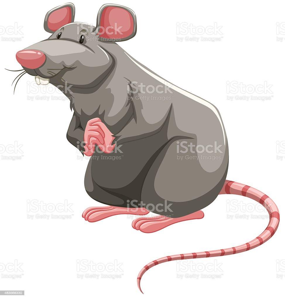 royalty free rat clip art vector images illustrations istock rh istockphoto com clip art retirement clip art artists