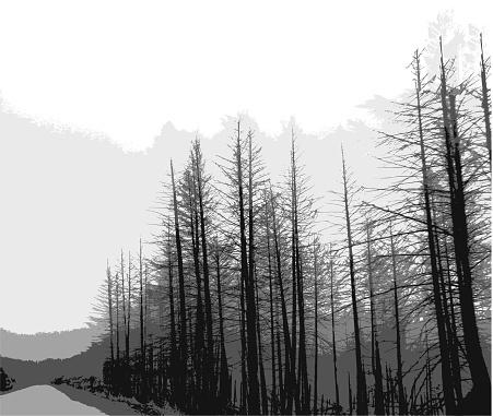 Grey Trees Road