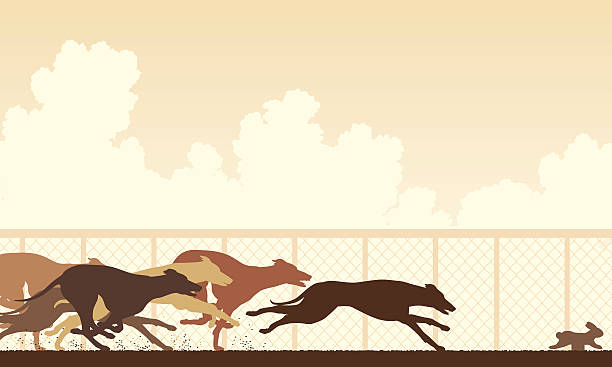 Greyhound dog race vector art illustration