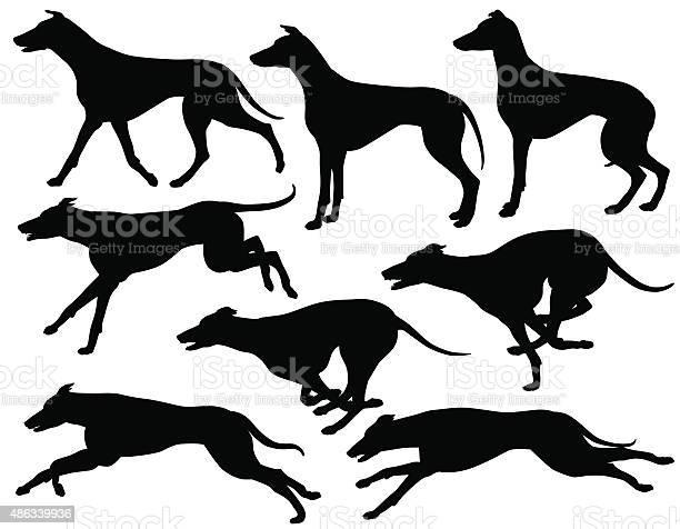 Greyhound dog silhouettes vector id486339936?b=1&k=6&m=486339936&s=612x612&h=voib5887gcxr8fyacysgymxicmgrcpnsghpoqebrycc=