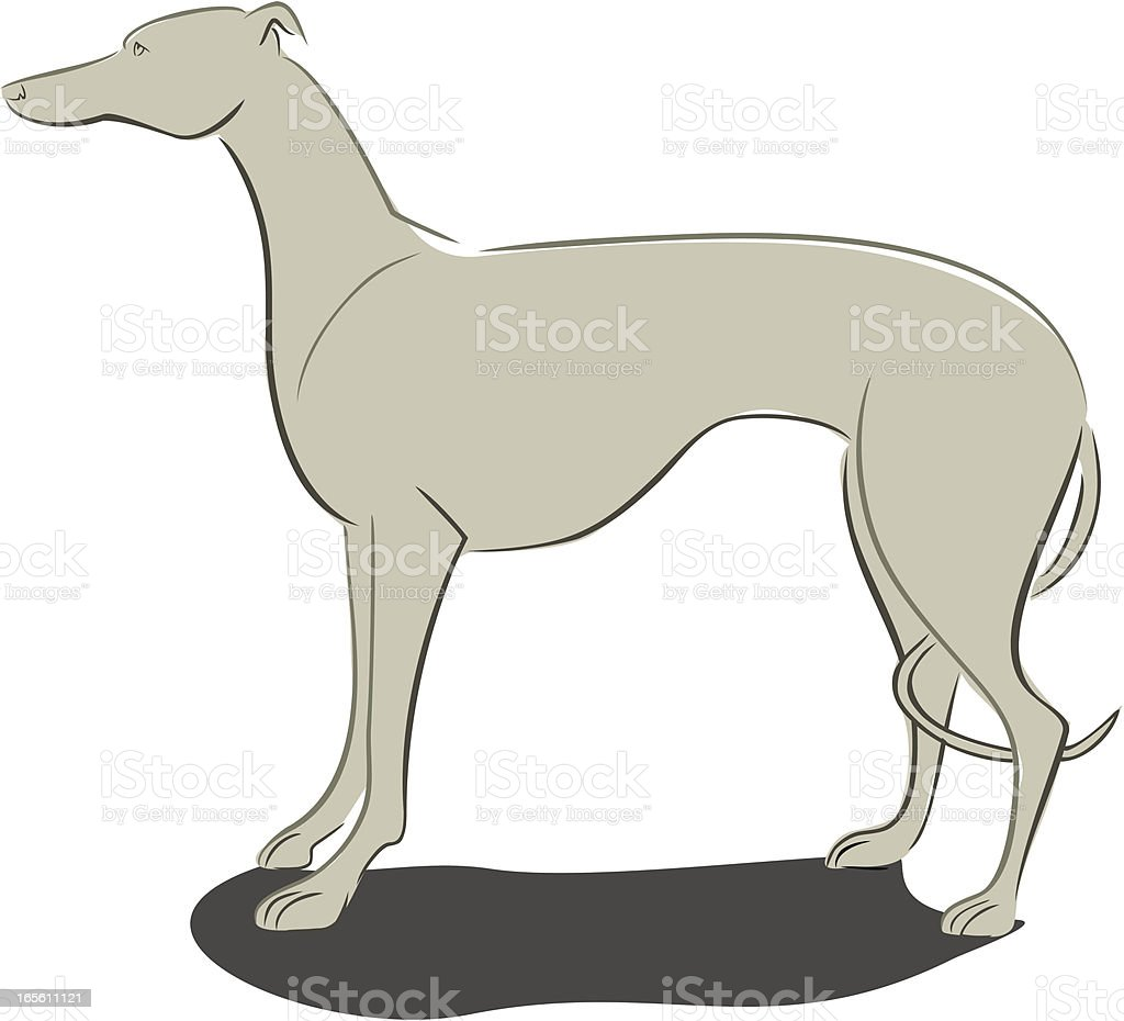 Greyhound or Whippet Standing royalty-free stock vector art