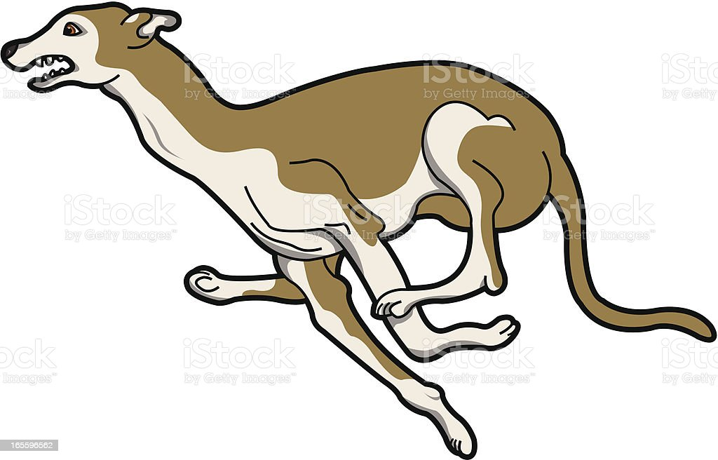 Greyhound royalty-free greyhound stock vector art & more images of animal