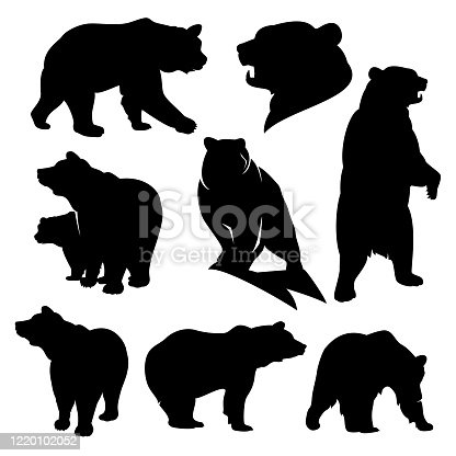 wild grizzly and brown bear silhouette set - walking, standing, rearing up animals black vector outlines