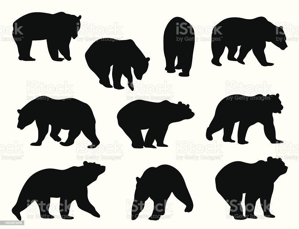 Grizzly Bears vektorkonstillustration