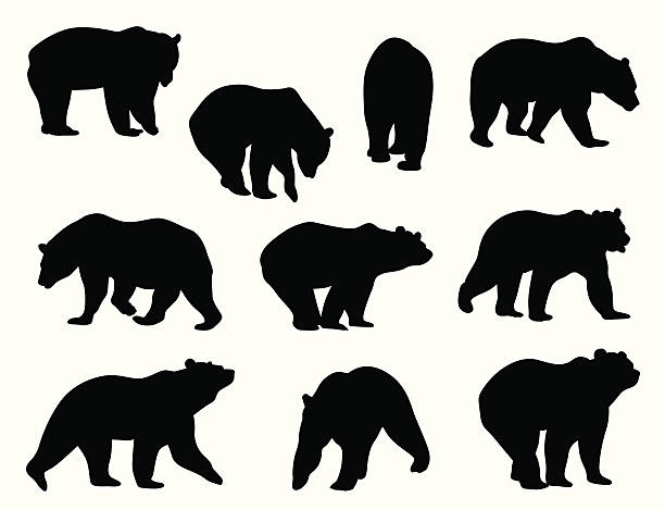 Grizzly Bears vector art illustration
