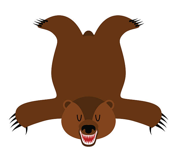grizzly bearskin. skin of bear isolated. hunter trophy isolated. - wollteppich stock-grafiken, -clipart, -cartoons und -symbole