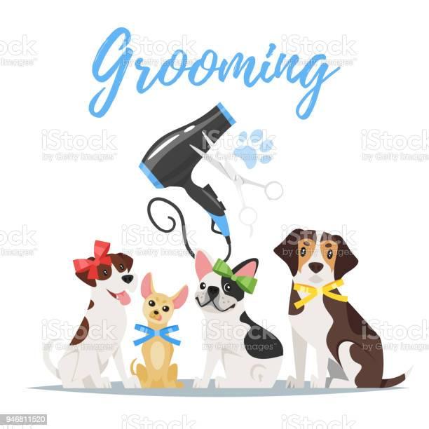 Grooming concept with dogs vector id946811520?b=1&k=6&m=946811520&s=612x612&h=c51u0xgpnmgludsrgcpu8plvilcwniatjrjkgmral8e=