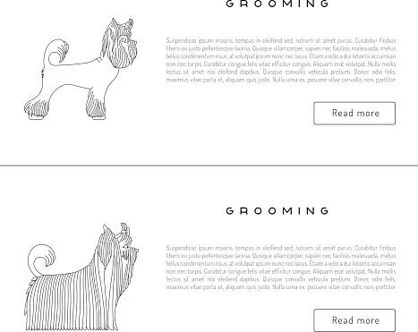 grooming dog card