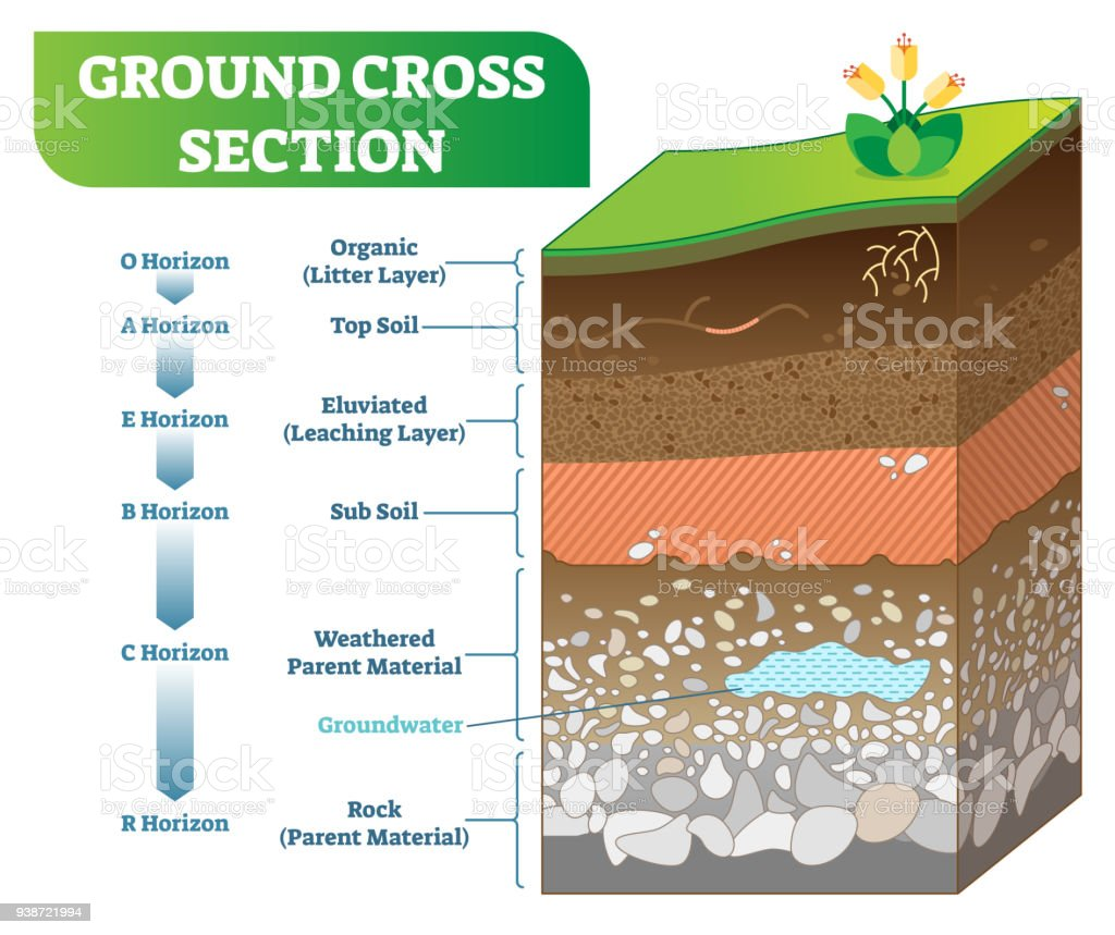 Ground Cross Section vector illustration with organic, topsoil, subsoil and other horizon levels. royalty-free ground cross section vector illustration with organic topsoil subsoil and other horizon levels stock illustration - download image now