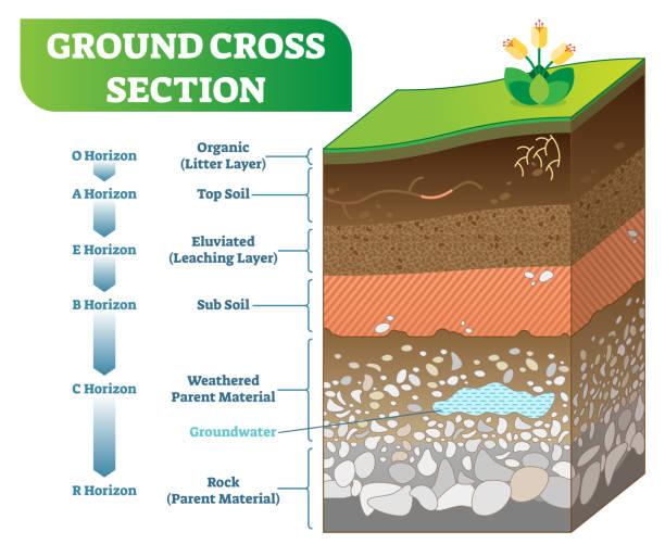 ilustrações de stock, clip art, desenhos animados e ícones de ground cross section vector illustration with organic, topsoil, subsoil and other horizon levels. - terra