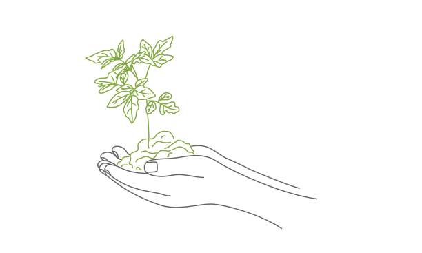 Ground with sprout in hands. Ground with sprout in hands. Hand drawn vector illustration. gardening stock illustrations
