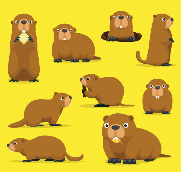 ilustraciones, imágenes clip art, dibujos animados e iconos de stock de marmota marmota mandril groundpig whistlepig cute dibujos animados vector ilustración - groundhog day