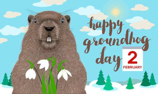 ilustraciones, imágenes clip art, dibujos animados e iconos de stock de tarjeta de felicitación del día de la marmota - groundhog day