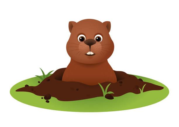 ilustraciones, imágenes clip art, dibujos animados e iconos de stock de vector del día de la marmota con la marmota linda - groundhog day