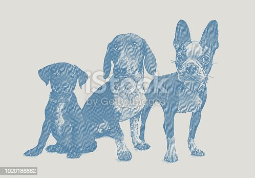 Engraving illustration of a group of 3 dogs in animal shelter hoping to be adopted