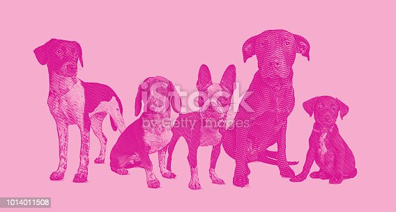 Engraving illustration of a group of 5 dogs in animal shelter hoping to be adopted