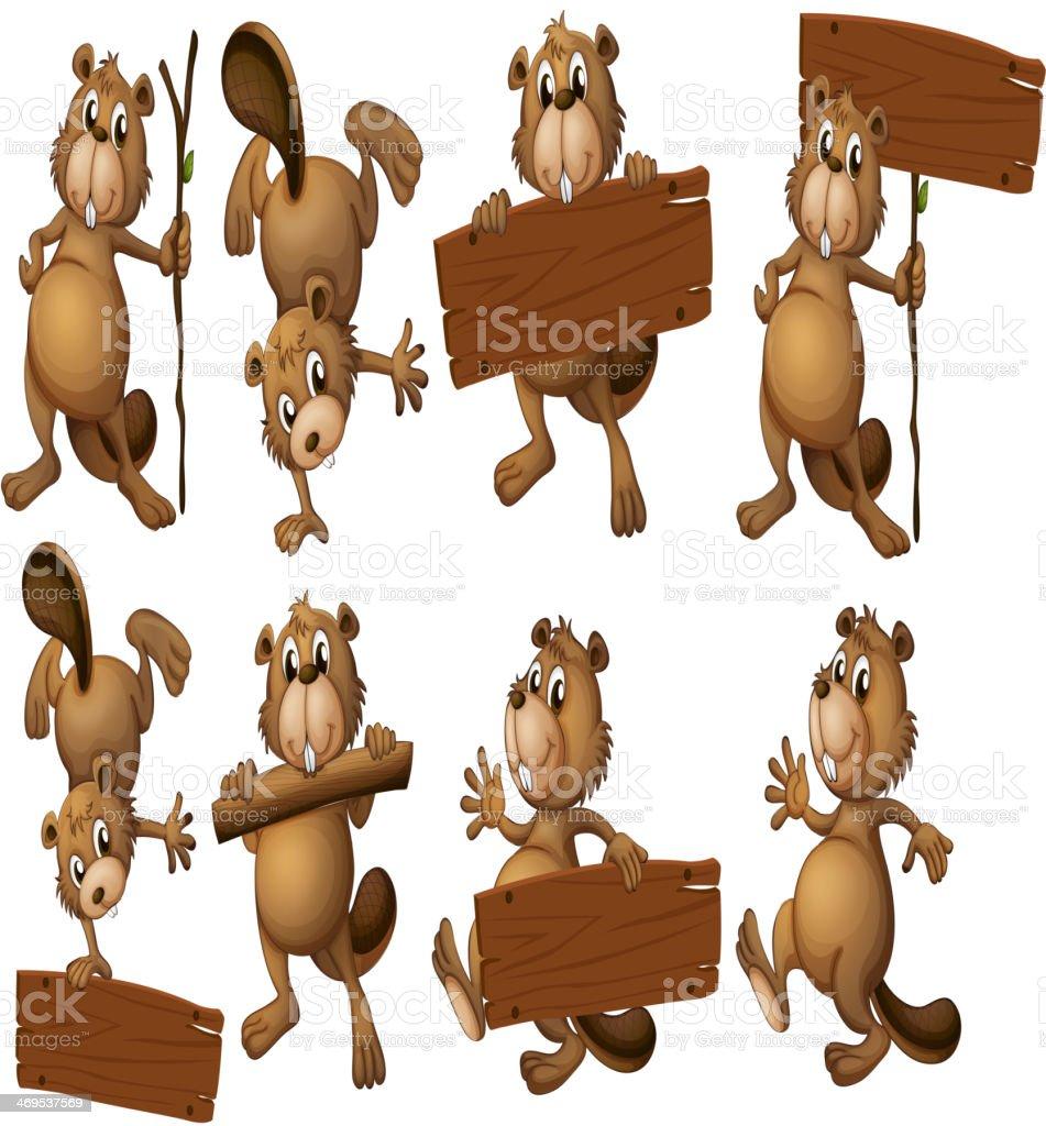 Groupe de castors avec des planches en bois vide - Illustration vectorielle