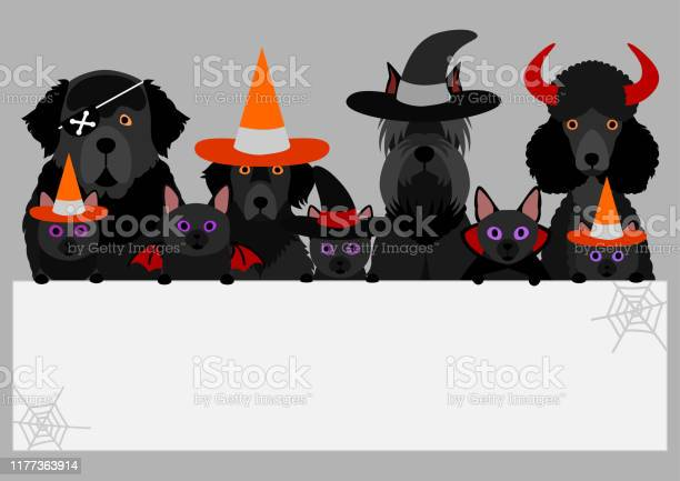 Group of black halloween dog and cat with white board vector id1177363914?b=1&k=6&m=1177363914&s=612x612&h=ks6poszmkdkecqhkxmrslbengieqfaes5r78eskcfw8=