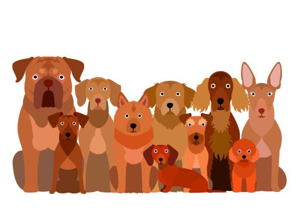 gruppe von braunen hund - vizsla stock-grafiken, -clipart, -cartoons und -symbole