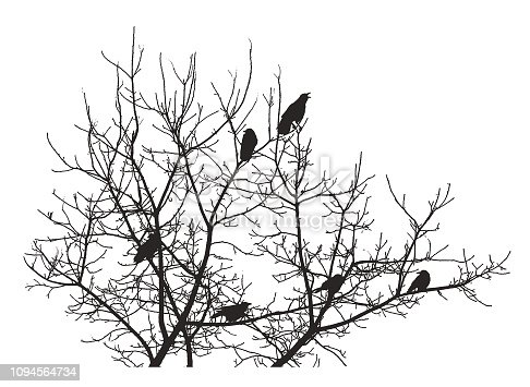 Silhouette Group of crows perching in a tree