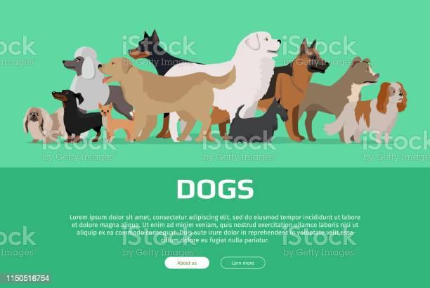 Group of different breeds dogs vector id1150516754?b=1&k=6&m=1150516754&s=612x612&h=hkgenpxfdxfa6vp6s3osqsrhaz2e ekmhoun 7mu14q=