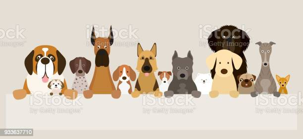 Group of dog breeds holding banner vector id933637710?b=1&k=6&m=933637710&s=612x612&h=myn7hjnyxcp pn48nu7uud c16zu1icx5uvser gijm=
