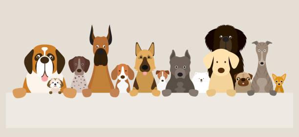 gruppe von hunderassen halten banner - schoßhunde stock-grafiken, -clipart, -cartoons und -symbole