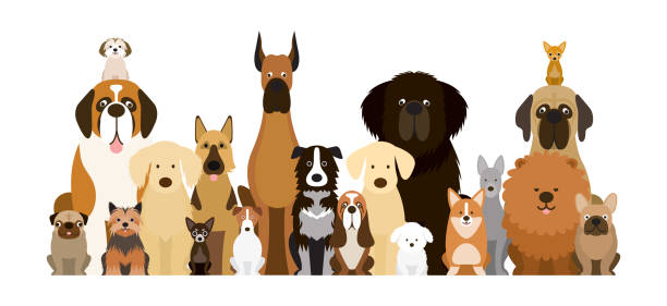 Group of Dog Breeds Illustration Various Size, Front View, Pet dog stock illustrations