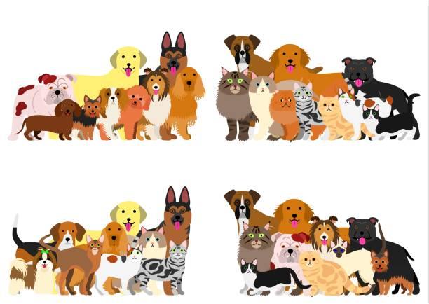 gruppe von hunden und katzen - collie stock-grafiken, -clipart, -cartoons und -symbole