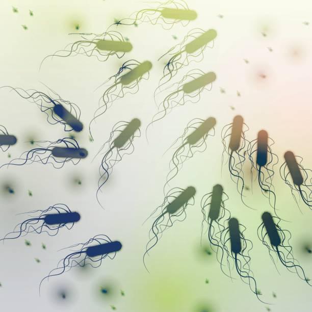 Group of E. coli Bacteria - Vector Illustration Group of E. coli Bacteria - Vector Illustration bacillus subtilis stock illustrations