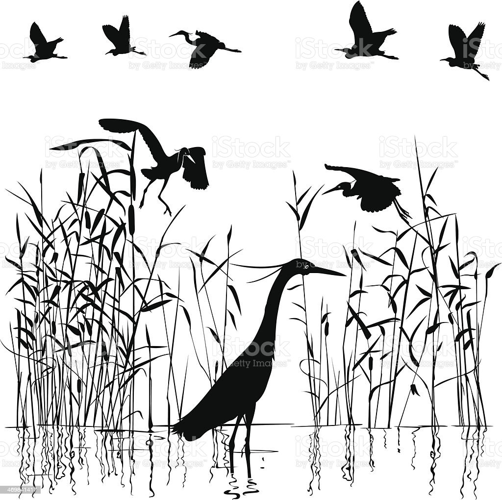 Group of Egrets in swampland vector art illustration
