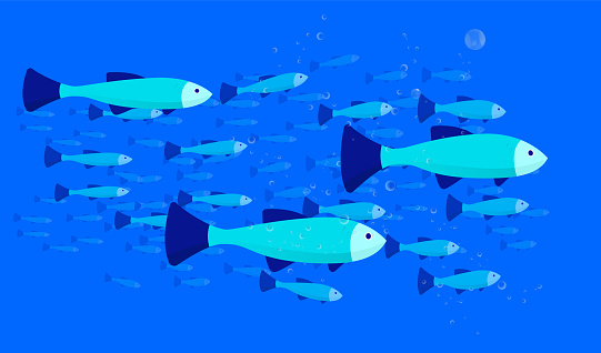 Group of fish vector illustration