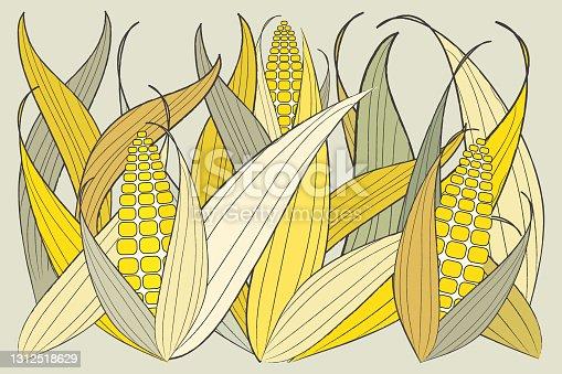 istock Group of fresh yellow corn plants. 1312518629