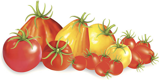 group of heirloom tomatoes - cherry tomato stock illustrations