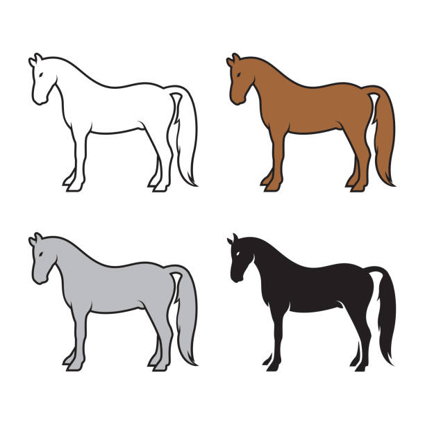 group of horse on a white background. wild animals. - pony stock illustrations