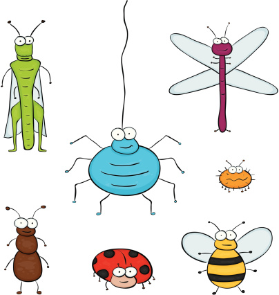 Group of insect