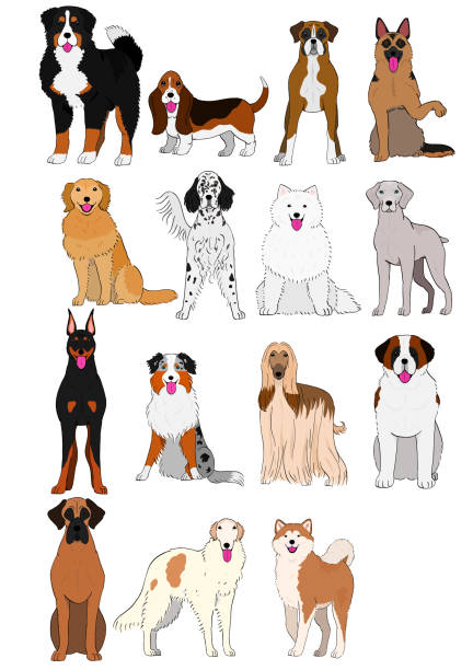 group of large and middle dogs breeds hand drawn vector art illustration
