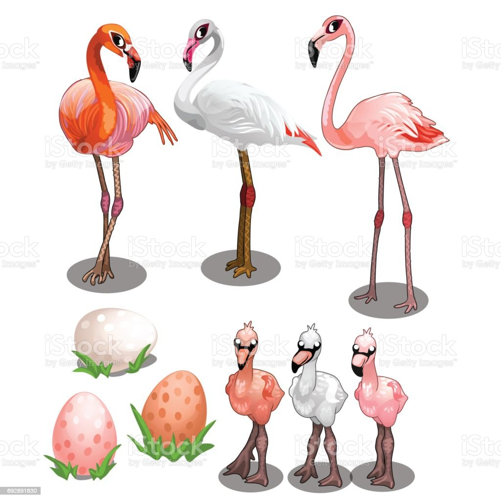 Group of large and small flamingos with eggs vector art illustration