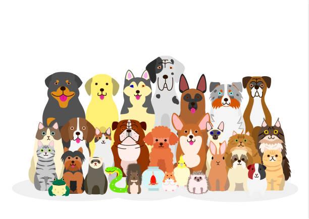 ilustraciones, imágenes clip art, dibujos animados e iconos de stock de group of pets - animales de granja