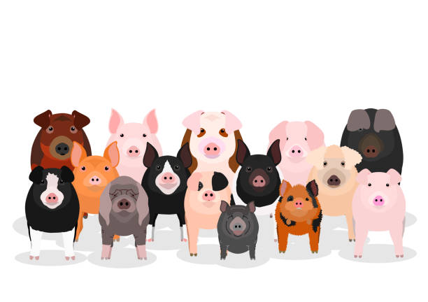 group of pigs vector art illustration