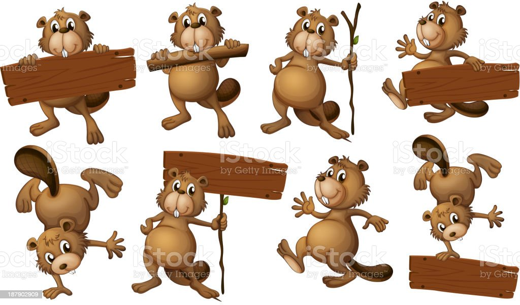 group of playful beavers with empty signboards vector art illustration