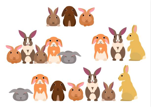 gruppe von kaninchen - kaninchenbau stock-grafiken, -clipart, -cartoons und -symbole