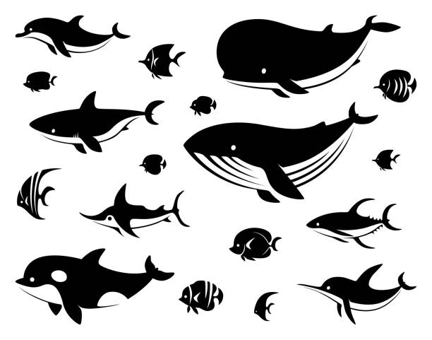 group of sea creatures silhouette vector illustration of group of sea creatures silhouette killer whale stock illustrations