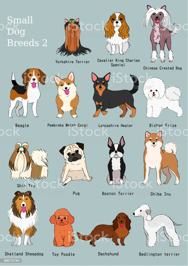 Group of small dogs breeds hand drawn chart stock vector art more