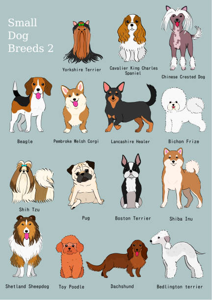 group of small dogs breeds hand drawn chart vector art illustration
