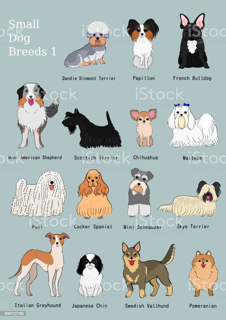 Group Of Small Dogs Breeds Hand Drawn Chart Stock Vector Art & More ...