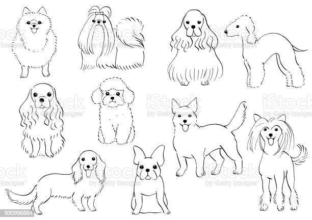 Free cocker spaniel dog Images, Pictures, and Royalty-Free